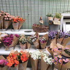 Novo post no iloveyou Dark Flowers, Pastel Flowers, Simple Flowers, My Flower, Vintage Flowers, Beautiful Flowers, Cactus Flower, Exotic Flowers, Cactus Plante