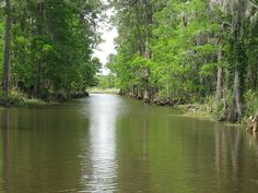 This was my happy place growing up.  A swamp tour in Moss Point/Pascagoula, Mississippi