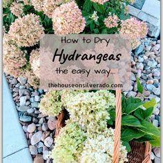 How to Dry Hydrangeas - The House on Silverado