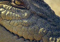 Spiritual Crocodiles | Scriptorium Blogorium - great lesson for teenagers!!!!