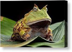 pacman-frog-dirk-ercken.jpg (242×176)