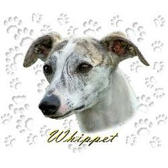 whippet supplies | whippet_sight_hound_show_dog_mousepad.jpg?height=250&width=250 ...