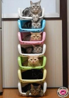 l'appart à chat