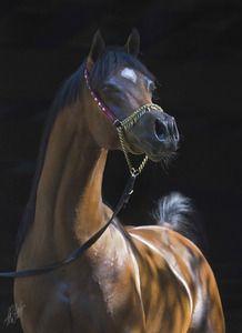 Scottsdale Arabian Horse Show site.