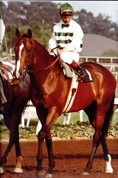 Champion racehorse, Exceller, whose death in a Swedish slaughterhouse raised an outcry across the world, helped establish the Exceller Fund and raise awareness of the fate of racehorses everywhere. The similar death of Ferdinand in Japan helped cement the movement to rehome Off The Track Thoroughbreds.