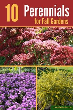 Plant a few of these beautiful perennials if you want blooms and foliage in your garden during the Fall season!