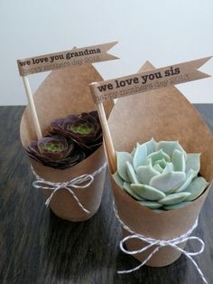 Succulent Party Favors Set of 5 by foundpurpose on Etsy