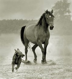 Horses by Wojtek Kwiatkowski. Dog and horse runnning together.