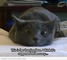 funny caption cats hunting face is supposed to be scary
