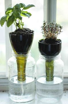 diy self watering containers for indoor gardening