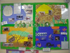 adaptations board