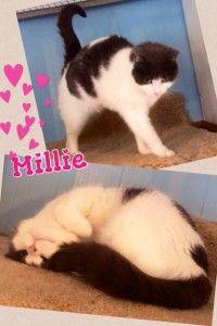 Cat boarding kennels - Millie