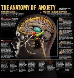 anatomy of anxiety. It amazes me how the itty bitty amygdala can cause such…