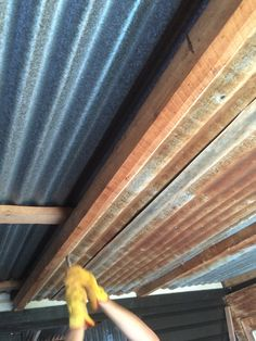 Original iron roof. Insulation bats and a sheet of rusty corrugated iron for a ceiling.