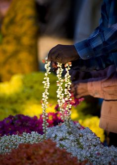Flower necklaces at Mysore flower market, India by Eric Lafforgue