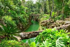 Image result for mayan riviera jungle