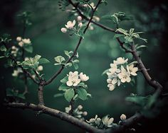 SALE Emerald Green Botanical Print Flower by EyePoetryPhotography, $25.60