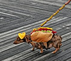 German fans around the world celebrated the World Cup win of Germany over Argentina and we have the pics. Funny Animal Pictures, Funny Photos, Funny Animals, Cool Photos, Amazing Photos, Dachshund Love, Four Legged, World Cup, Funny Dogs