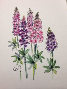 Lupine Watercolor Card