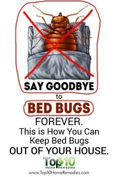 Here S How To Take Control Get Rid Of Bed Bugs From Your House