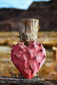 Prickly Pear heart