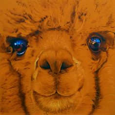 Alpaca by Steve Nayar from the A Brush with Life exhibition at Harbour House, August 2016
