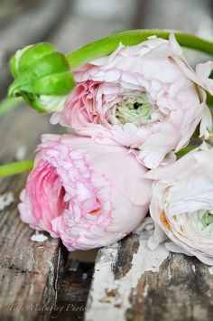 HWIT BLOG - It's all about Flowers, Lifestyle & Photography