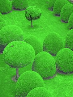 These trees look like they're out of a storybook!