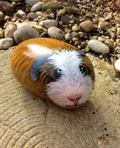 Guinea pig hand painted on stone pebble rock cobble no hutch run or cage