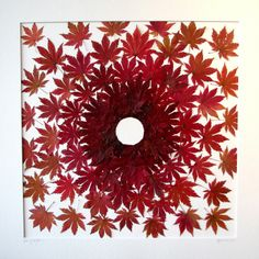 Japanese Sun  Japanese Maple leaves are used to create a circle.