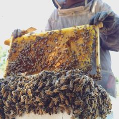 Do you know the optimal amount of space to give your #bees? #beekeeping http://beekeepinglikeagirl.com/how-much-room-should-i-give-my-bees/