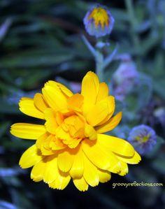 Mystery flower! Spring 2012