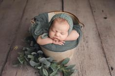 Succulents for baby photography