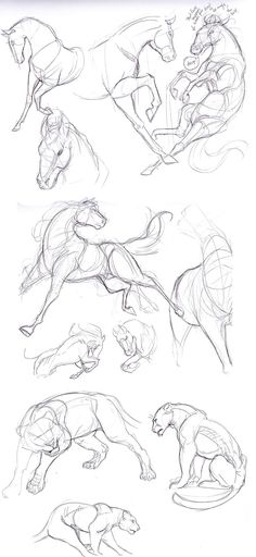 Anatomy Drawing Reference How to draw horses Horses. Horse Drawings, Animal Drawings, Art Drawings, Drawing Animals, Lion Drawing, Animal Sketches, Drawing Sketches, Sketch Art, Drawing Tips