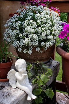 Through My Creative Mind blog...our potted flower garden on the deck
