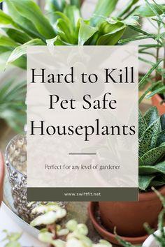 Hard to Kill Pet Safe Houseplants