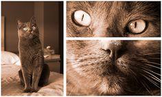Mi Lilith - Elegancia felina [retratos] #retratos #portraits #gatos #cats #miradas #ojos #eyes #smartness #elegance