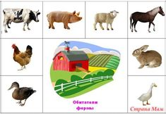 Animal Activities, Kids Learning Activities, Teaching Kids, Farm Animals, Animals And Pets, English Primary School, Farm Theme, Animal Projects, Kids Corner