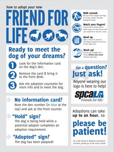 Dog Adoption Instructional Poster - Taylor Anne Benton   Graphic Designer