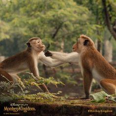 Grab a friend and see in theatres now! Monkey Kingdom, Disney Movies Anywhere, In Theaters Now, Theatres, Fox, Earth, Pets, Nature, Animals