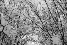 Chamonix - Janvier 2012