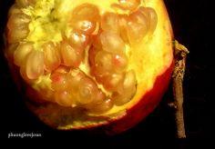 Pomegranate, Punica granatum .....Trái Lựu, Thạch Lựu.....#15 /
