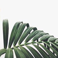 Palm close up
