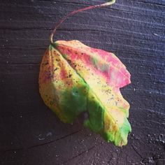 One little leaf so many colors. Fall is going to be gorgeous this year. #fall #fallleaves #changingleaves #naturefreak #naturelover #naturelovers #natureaddict #naturephotography #nature_perfection #nature_obsession #getdirty #getoutside #explore #exploreeverything #explorenature by fearless_freedom_art