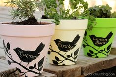Chalkboard Planters. Need to make for Jessica.