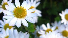 New free stock photo of nature field flowers #freebies #FreeStockPhotos