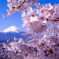 Photo by ©: Arakurayama Sengen Park, Yamanashishi - Japan (Backround Mt.Fuji) to be featured ! Beautiful Flowers, Beautiful Places, Beautiful Pictures, Monte Fuji Japon, Landscape Photography, Nature Photography, Nature Architecture, Cherry Blossom Japan, Japanese Cherry Blossoms