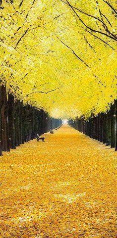 Georgengarten Hannov #roundtheworld #worldtrip #beautifulview #beautifultravel…