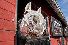 #Equstom #Horses #hevoset Cow, Horse, Animals, Animales, Animaux, Cattle, Horses, Animal, Animais