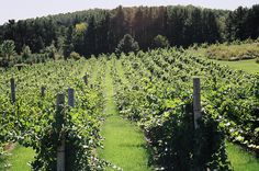 """""""Out of her earnings she plants a vineyard."""" Proverbs 31:16"""